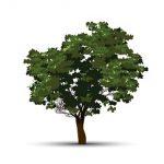 הדברה בעצים ובגינות